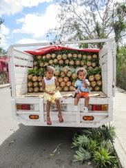 négociation réussie: 2 ananas contre 2enfants!